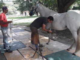 O casqueamento profissional é a base do bom equilíbrio do cavalo. E d saúde dos cascos.